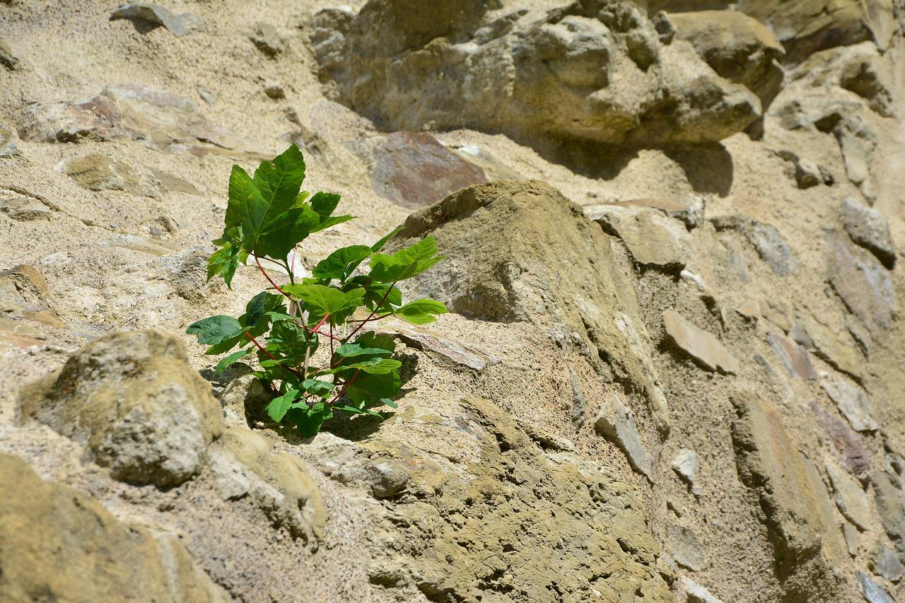 Conscientia raap jij de kansen op - groei